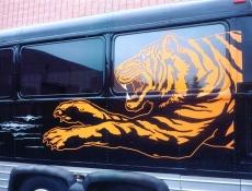 tiger partial wrap